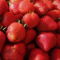 Strawberry picking in the Ottawa area