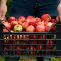 after-apple-picking-1-1320571-638x426