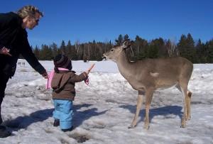 Feeding deers on a walking trail