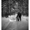 Skateway through the Forest